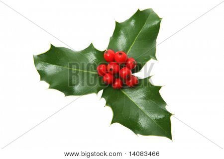Three Leaf Holly (Isolated)
