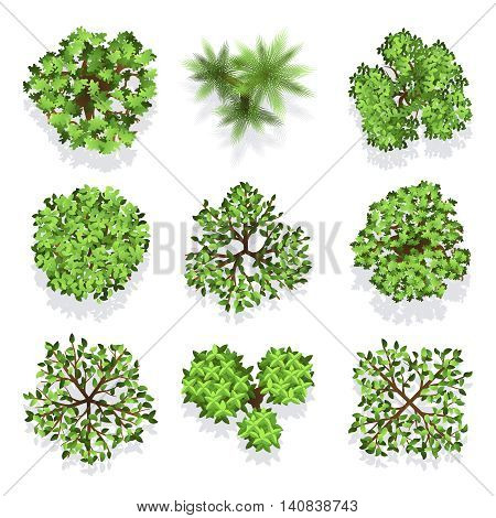 Trees top view vector set for landscape design and map. Green tree for garden, illustration trees for forest