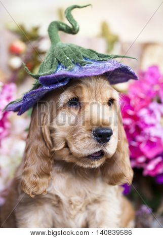 puppy  in a floral hat