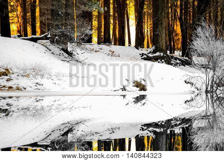 Fire raging through a wintery snow covered alpine forest.