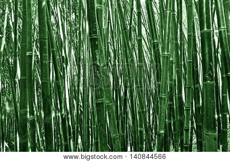 The bamboos are a subfamily of flowering perennial evergreen plants in the grass family Poaceae.