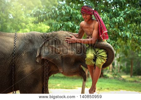 Culture of SurinThailand.The love during elephant with mahout