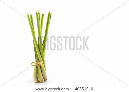 Lemon grass or Oil grass on white background.