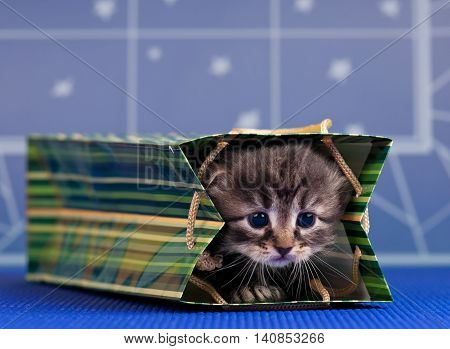 Cute little kitten in a bright gift bag over blue background