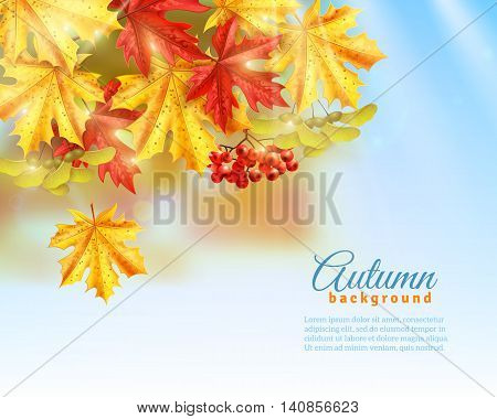 Light blue background with light effects shadows and colorful autumn leaves and rowan flat vector illustration