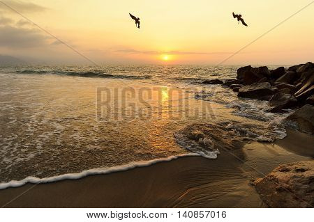 Ocean sunset birds is a seascape with sea water moving through sand and rocks as the orange sun sets on the ocean horizon and two seabirds hunt for their food.
