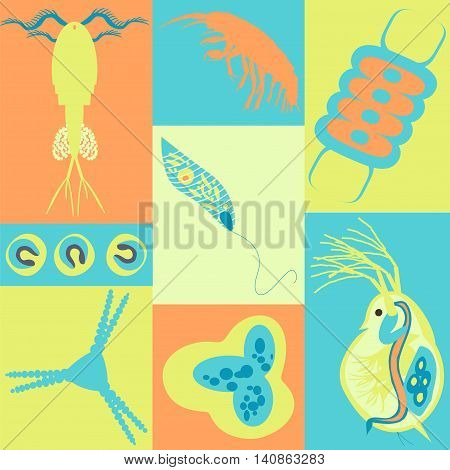Plankton Phytoplankton Zooplankton
