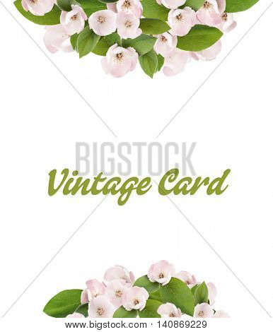 Vintage floral card. Apple blossom with leaves