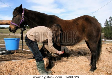 Trimming My Horses Hooves