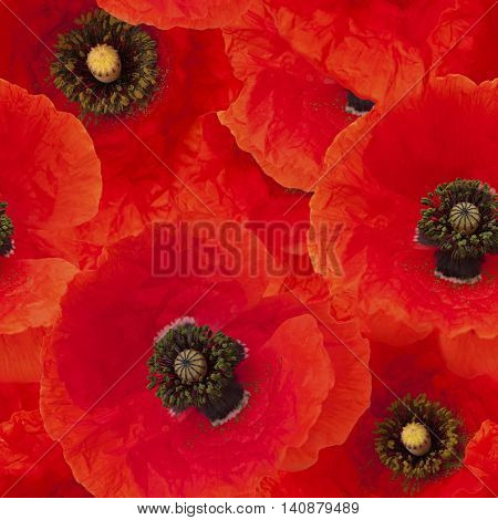 Seamless Repeatable Photo Background Of Red Poppies