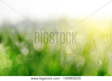 Fresh spring bokeh and green grass. Soft Focus. Abstract Nature Background