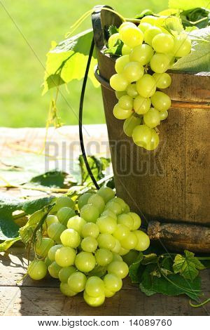Green grapes and leaves in an old bucket