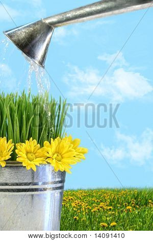 Watering flowers and grass for spring planting