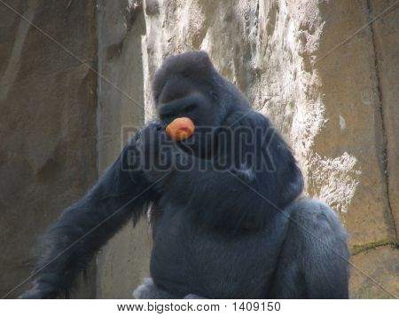 Gorilla And His Orange