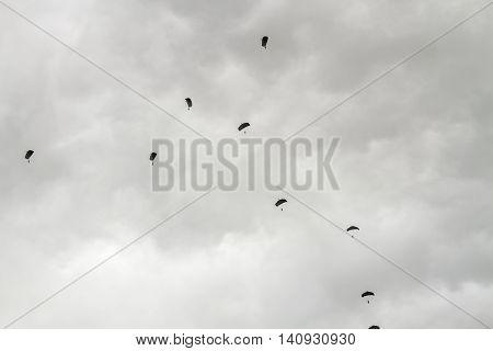 Many Parachutists In Sky