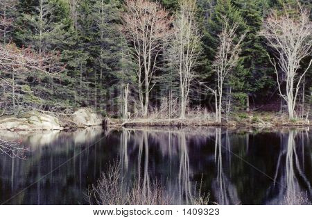 Reflected Trees And Rock In Maine