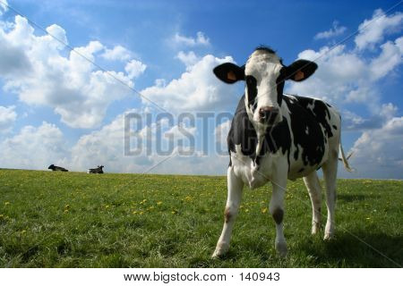 a cow in a pasture with cloudy blue sky at the background poster