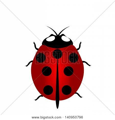 Illustration red Ladybug with seven points on the back