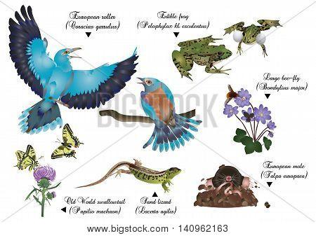 It is illustration of amazing nature set - European animals.