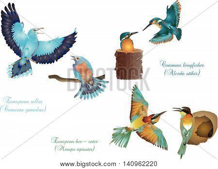 It is illustration of European beautiful birds couples.