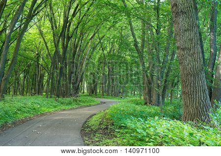vibrant green of forest foliage and vegetation along walking trails of crosby farm regional park in saint paul minnesota