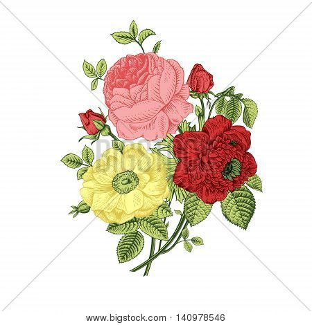 Floral card. Bouquet of roses dogrose and anemone. Vintage vector illustration. Classic. Bright color.