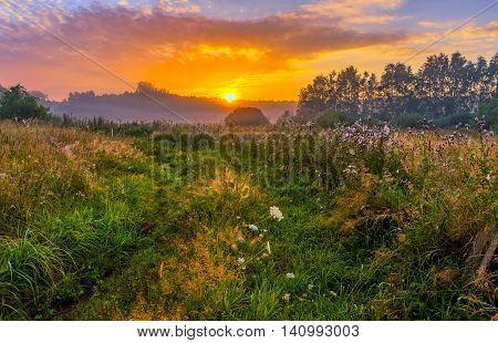 Vibrant landscape with foggy meadow in Poland. Countryside with wild foggy meadow. poster