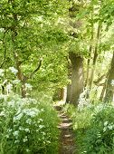 Idyllic forest path with white flowers and smith sunbeams. Nature background, spring forest. Selective focus of a footpath through a mixed forest with flowers next to the path. poster