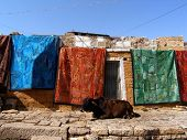 relaxing time for the cow with colorful textile poster