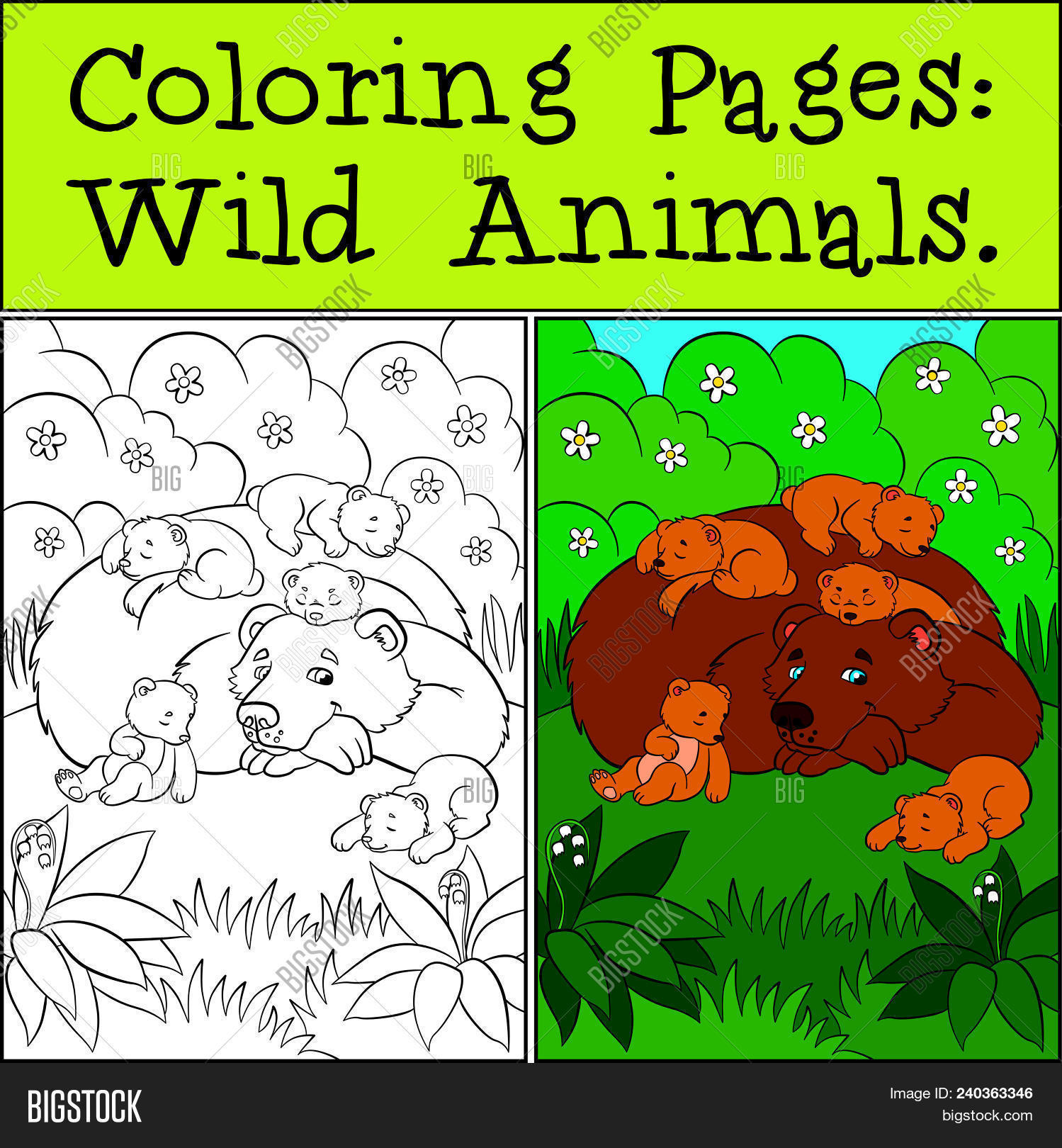 Coloring Pages: Wild Vector & Photo (Free Trial) | Bigstock