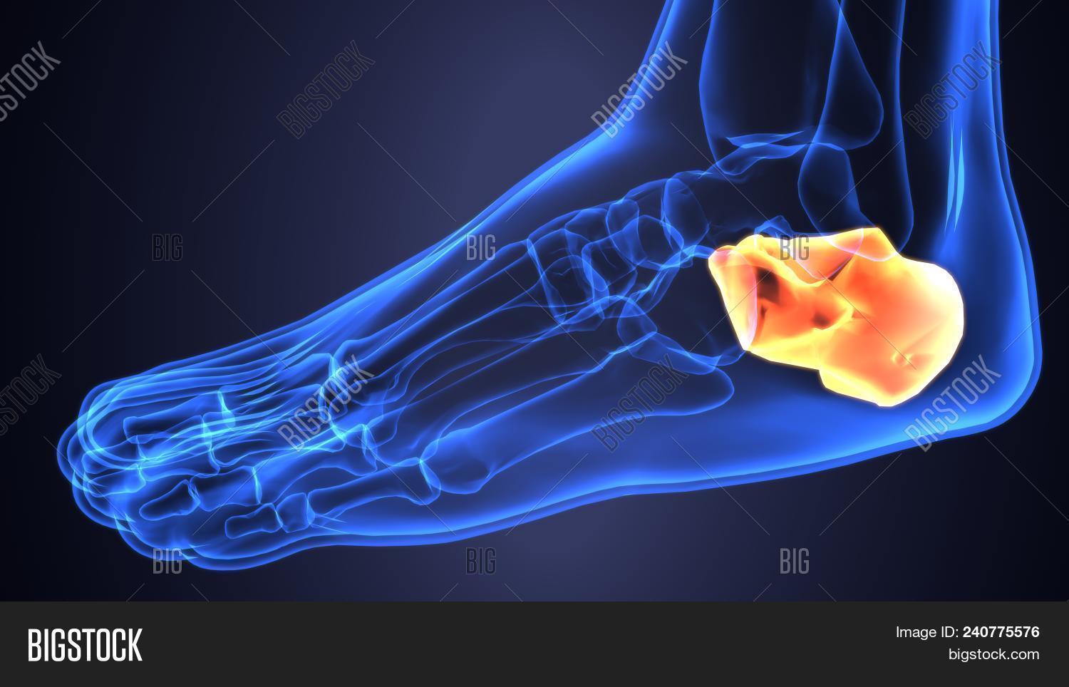 3d Illustration Foot Image Photo Free Trial Bigstock