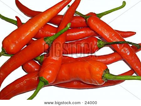 Red Chilli Bundle