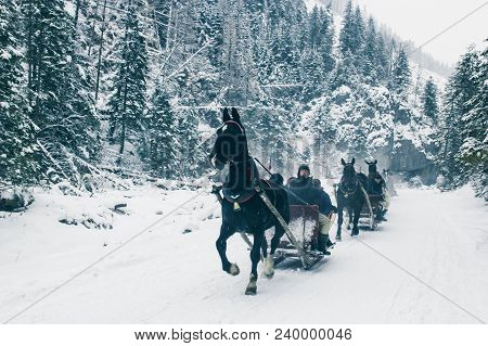 Zakopane, Poland, February 10, 2018, Several Harnesses Of A Sleigh Drawn By Horses Are Riding Along
