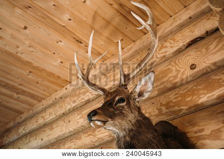 Brown Deer Head On Wooden Wall Background. Animals Draft Or Trophy Decorative Object. Taxidermy Conc