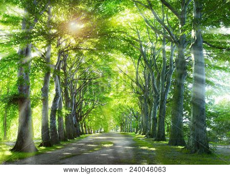 Way through the forest.