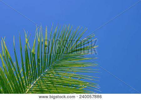Green Palm Tree On Sky Background. Palm Leaf Ornament. Aqua Blue Toned Photo. Tropical Island Natura
