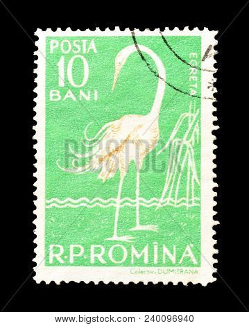 Romania - Circa 1957 : Cancelled Postage Stamp Printed By Romania, That Shows The Great Egret.