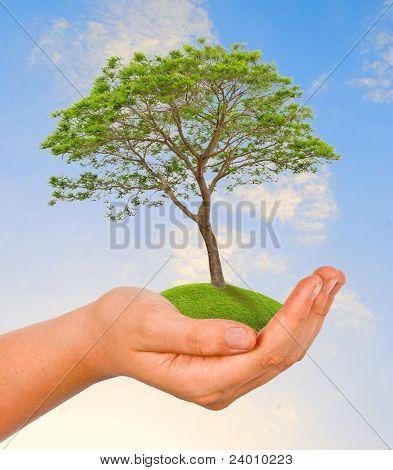 De la mano del árbol
