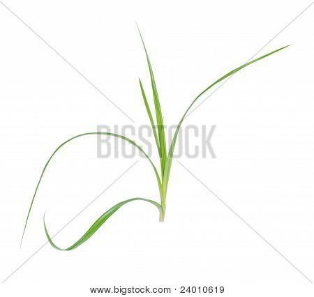 Seage Plant