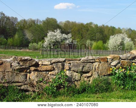Spring Beautiful Countryside Landscape With With A Stone Wall And Flowering Cherry Tree On The Edge
