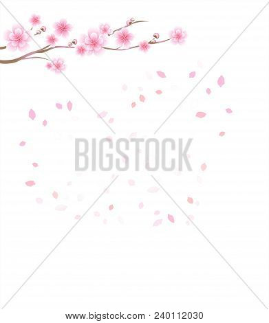 Branch Of Sakura With Pink Flowers. Cherry Blossom And Flying Petals Isolated On White Background. P