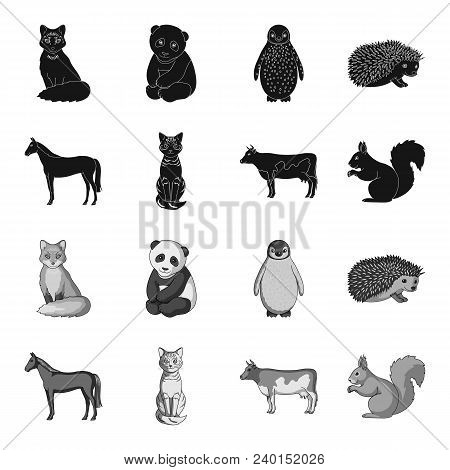Horse, Cow, Cat, Squirrel And Other Kinds Of Animals.animals Set Collection Icons In Black, Monochro