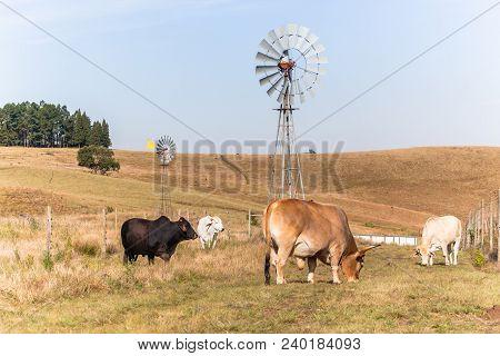 Animals Cattle Beef Farming
