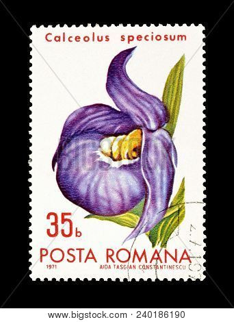 Romania - Circa 1971 : Cancelled Postage Stamp Printed By Romania, That Shows Slipper Flower.