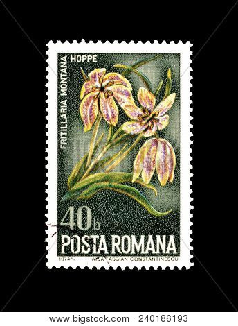 Romania - Circa 1974 : Cancelled Postage Stamp Printed By Romania, That Shows Fritillaria Flower.