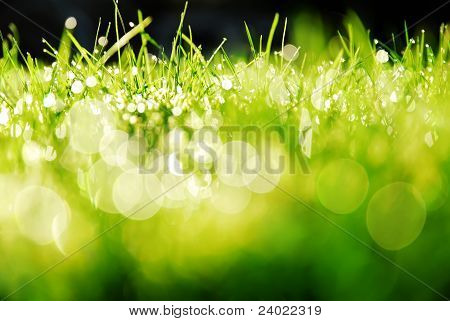 Sunshine on Wet Grass