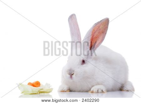 white rabbit with vegetables isolated on white background poster