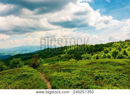Footpath Through Grassy Mountain Meadow. Beautiful Carpathian Scenery