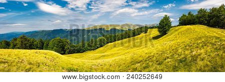 Panorama Of Trees On The Grassy Hillside. Svydovets Mountain Ridge In The Distance. Beautiful Summer