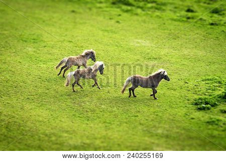 Three Horses Running On A Green Field In The Spring Seen From Above